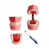 BM1 - Model higieny jamy...